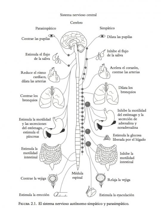 Sistema nervioso central Se puede ver más grande en http://a2.typepad.com/6a01675ff86558970b019b04db0472970d-pi