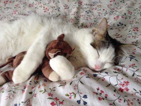 cat_sleeping_stuffed_toy_hug_relax_pet-1240973.jpg!d